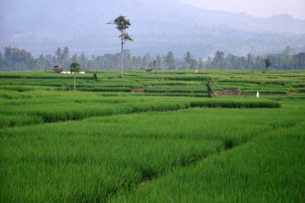 Permalink to Pengangguran di Desa Bertambah, Pemerintah Salahkan Musim Tanam
